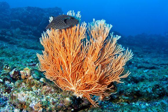 Reserva Biológica Isla del Caño