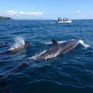 Tour de Observación de  delfines y ballenas