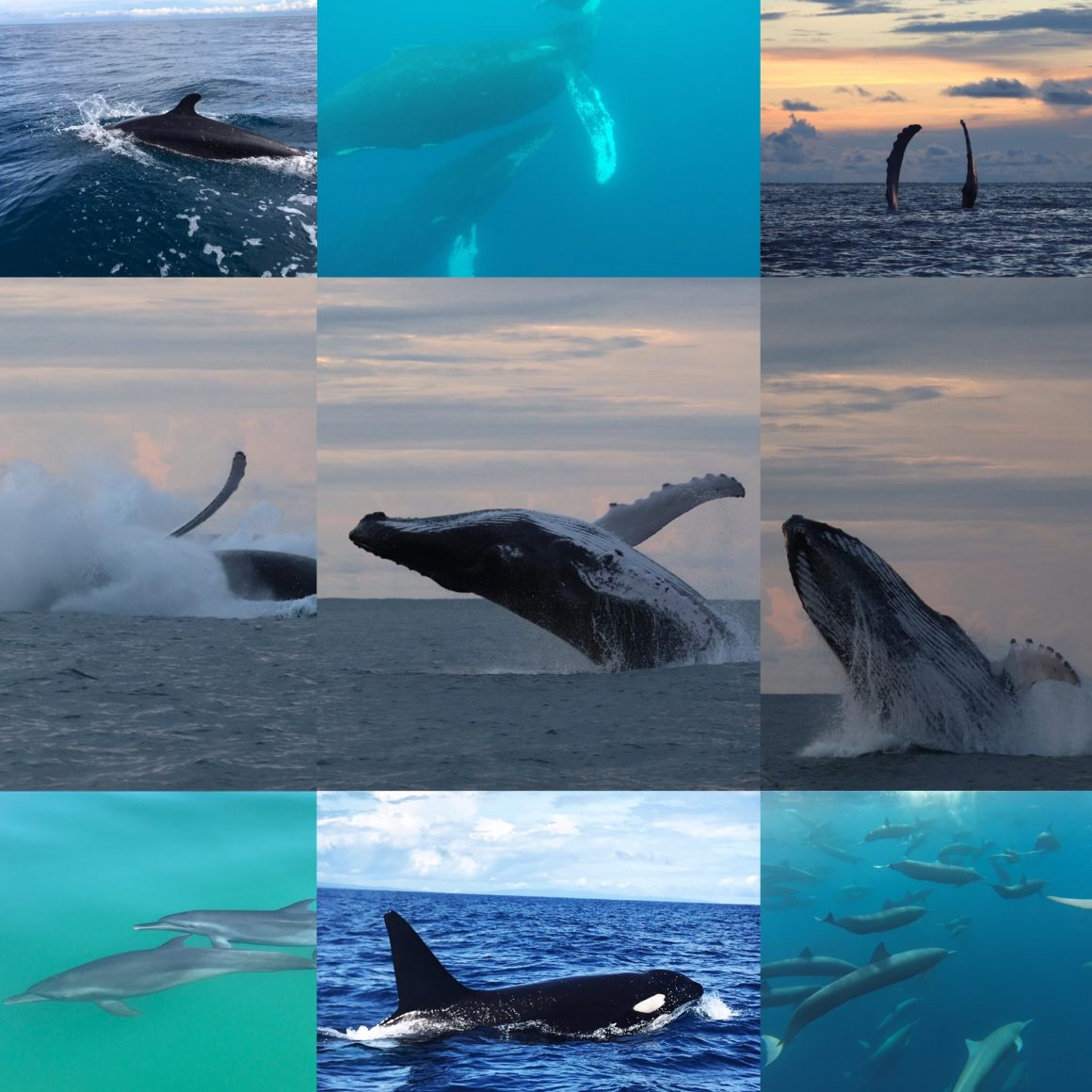 Whale Watching and Dolphin Watching Tour